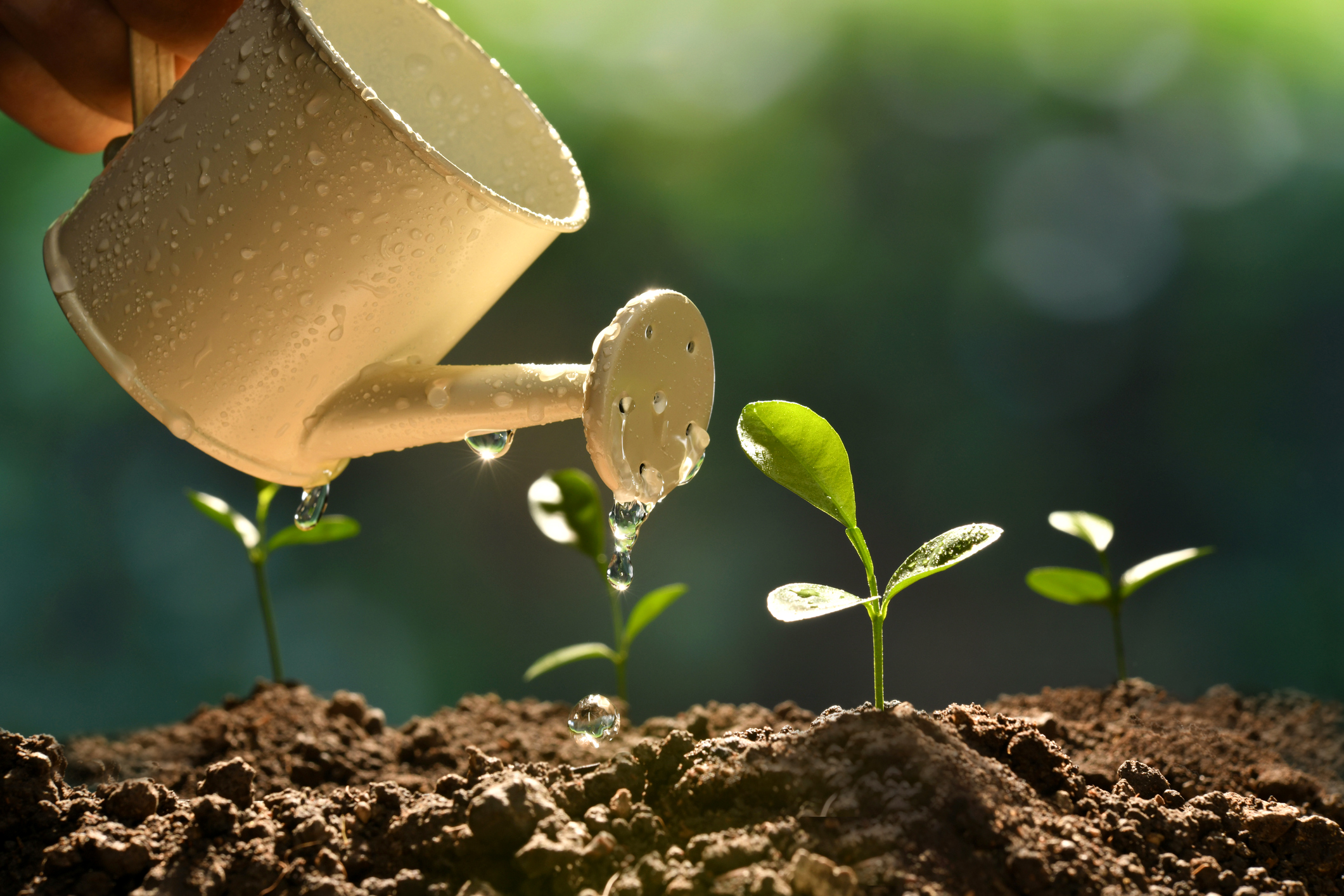 5 Factors to Creating a Perfect Growing Environment