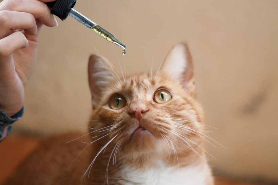 CBD Oil for Cats: Benefits and Side Effects
