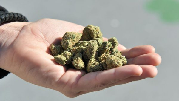 Medical Cannabis in the World