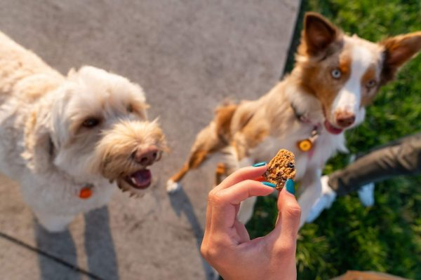 CBD Oil for pets: Benefits and Side Effects