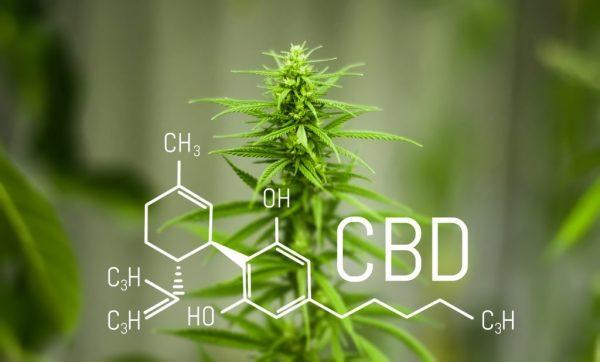 What Is CBD,Hemp and CBD Flower?